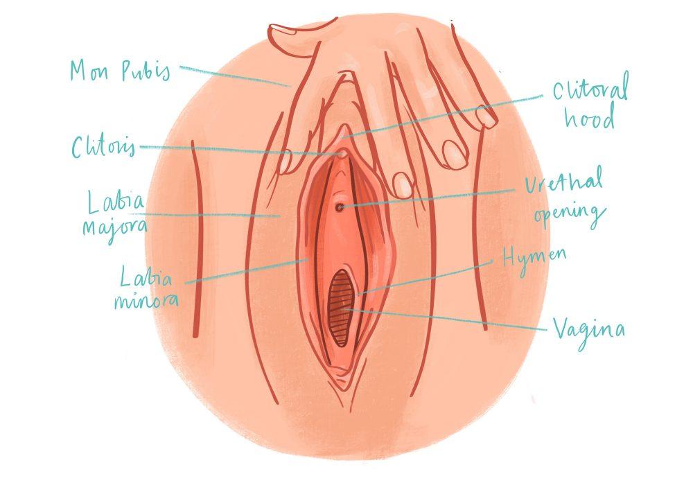 ermafrodite porno